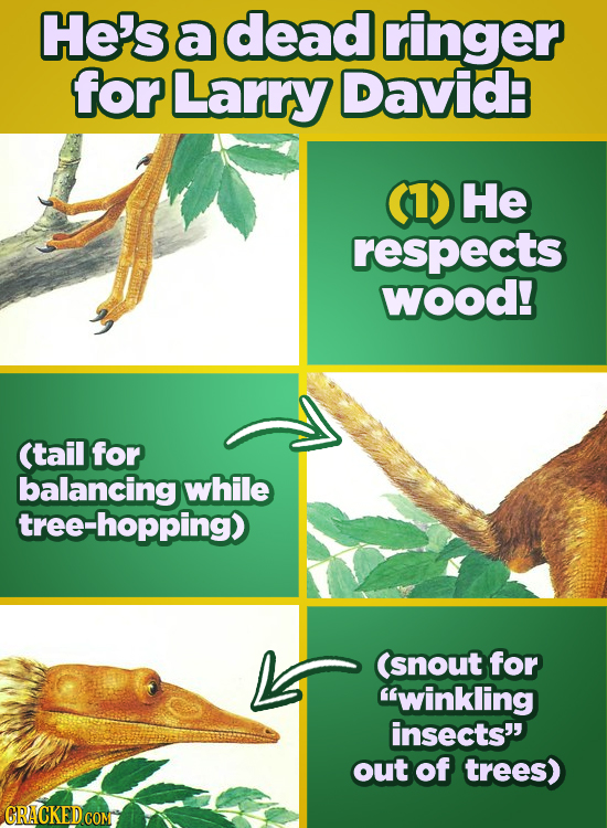 He's a dead ringer for Larry David (1) He respects Wood! (tail for balancing while tree-hopping) (snout for winkling insects' out of trees) CRACKED