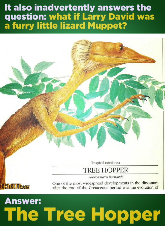 It also inadvertently answers the question: what if Larry David was a furry little lizard Muppet? Tropical rainforest TREE HOPPER Arbrosaurus hernardi