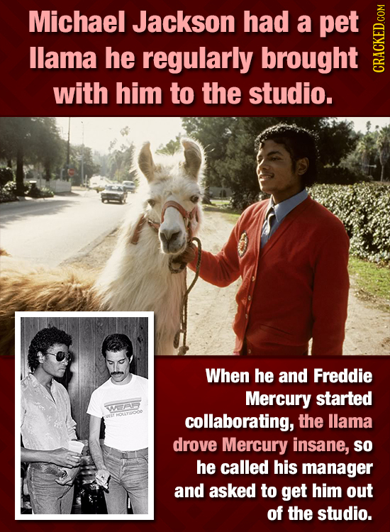 Michael Jackson had a pet llama he regularly brought cRauh with him to the studio. When he and Freddie Mercury started WF FNOLYIOOO collaborating, the