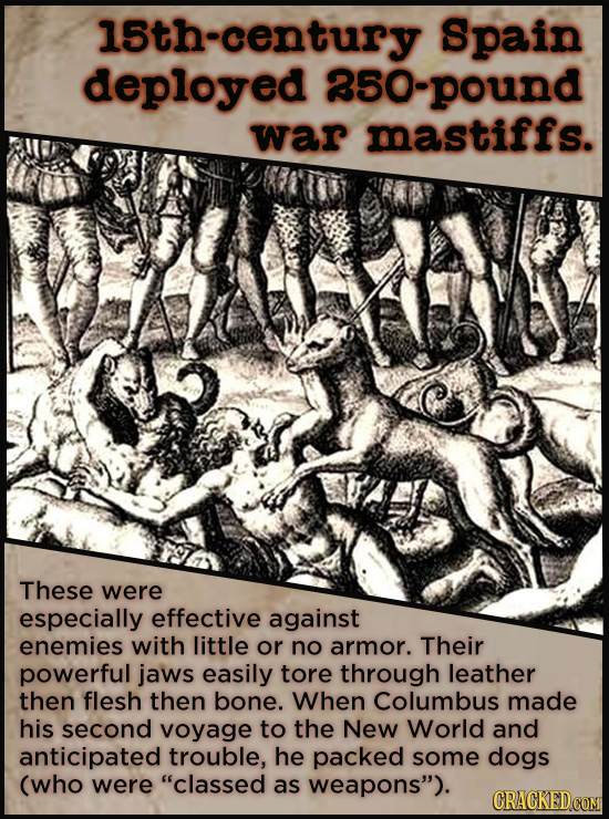 15th-century Spain deployed 85O-pound war mastiffs. These were especially effective against enemies with little or no armor. Their powerful jaws easil
