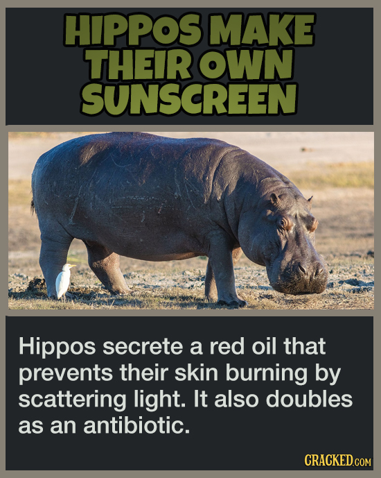 20 Animal Abilities That Will Make You Feel Inferior