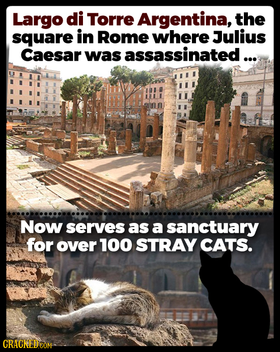Largo di Torre Argentina, the square in Rome where Julius Caesar was assassinated ... Now serves as a sanctuary for over 100 STRAY CATS.
