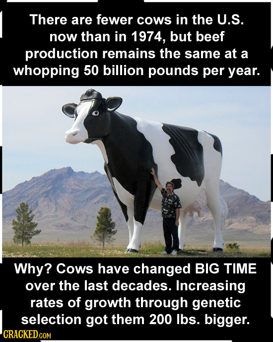 There are fewer Cows in the U.S. now than in 1974, but beef production remains the same at a whopping 50 billion pounds per year. Why? Cows have chang