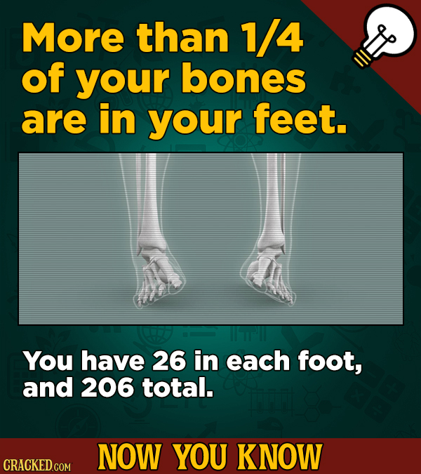 More than 1/4 of your bones are in your feet. Tr You have 26 in each foot, and 206 total. NOW YOU KNOW CRACKED COM