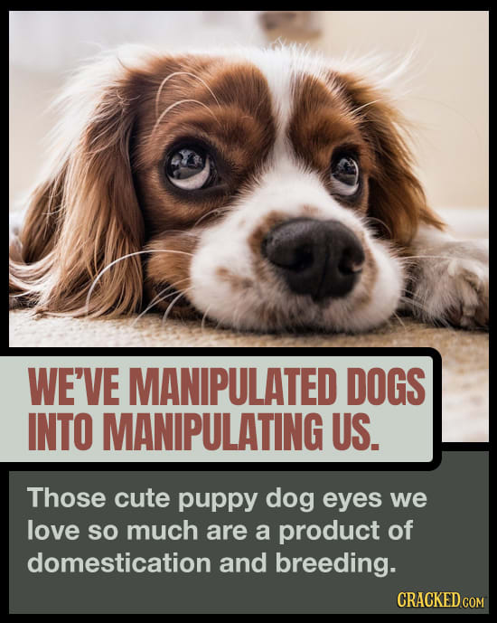 Your Dog Is Adorably Manipulating You