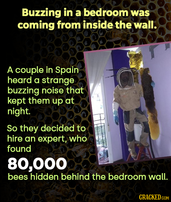Buzzing in a bedroom was coming from inside the wall. A couple in Spain heard a strange buzzing noise that kept them up at night. So they decided to h