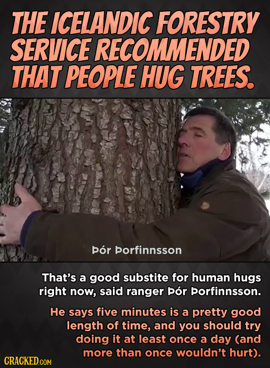 THE ICELANDIC FORESTRY SERVICE RECOMMENDED THAT PEOPLE HUG TREES. por porfinnsson That's a good substite for human hugs right now, said ranger pOr por