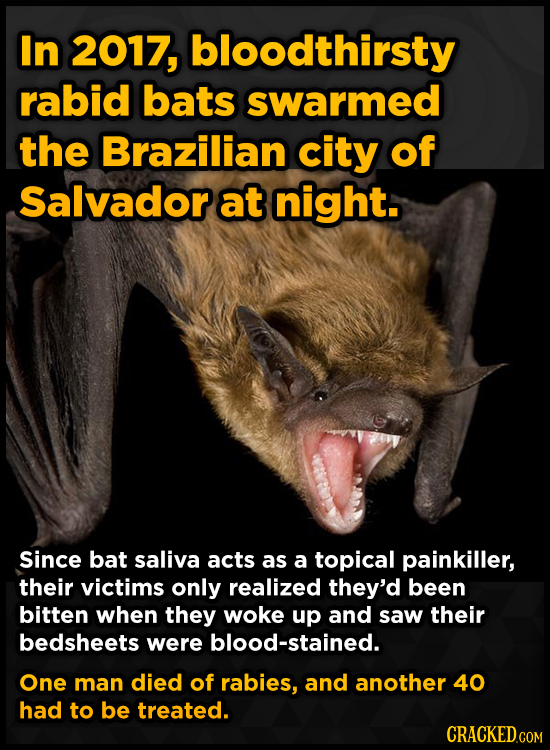 In 2017, bloodthirsty rabid bats swarmed the Brazilian city of Salvadorat night. Since bat saliva acts as a topical painkiller, their victims only rea