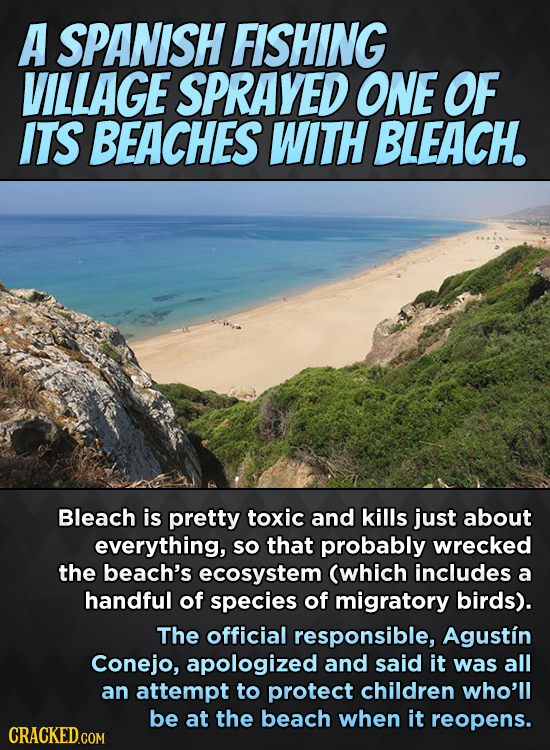 A SPANISH FISHING VILLAGE SPRAYED ONE OF ITS BEACHES WITH BLEACH. Bleach is pretty toxic and kills just about everything, so that probably wrecked the