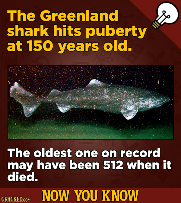 The Greenland shark hits puberty at 150 years old. The oldest one on record may have been 512 when it died. NOW YOU KNOW CRACKED COM