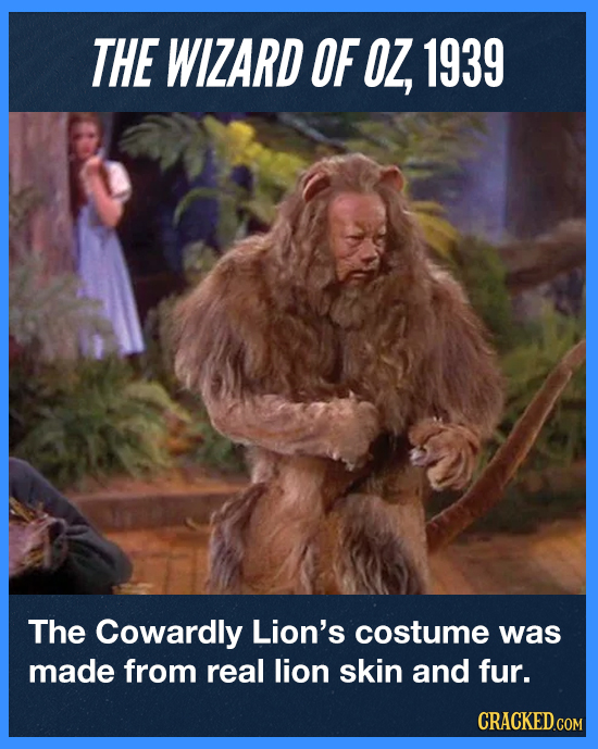 THE WIZARD OF OZ, 1939 The Cowardly Lion's costume was made from real lion skin and fur. CRACKED.COM
