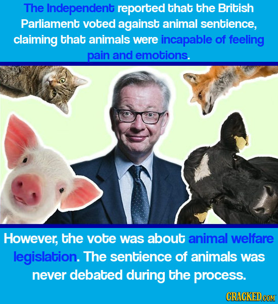 The Independent reported that the British Parliament voted against animal sentience, claiming that animals were incapable of feeling pain and emotions