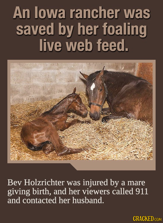 An lowa rancher was saved by her foaling live web feed. Bev Holzrichter was injured by a mare giving birth, and her viewers called 911 and contacted h