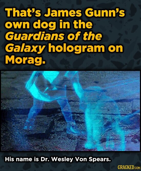 That's James Gunn's own dog in the Guardians of the Galaxy hologram on Morag. His name is Dr. Wesley Von Spears.