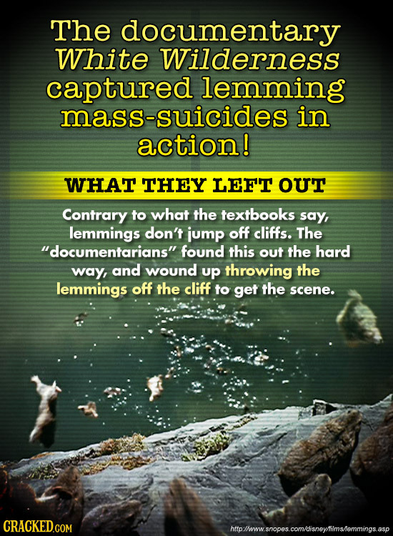 The documentary White Wilderness captured lemming mass-suicides in action! WHAT THEY LEFT ouT Contrary to what the textbooks say, lemmings don't jump