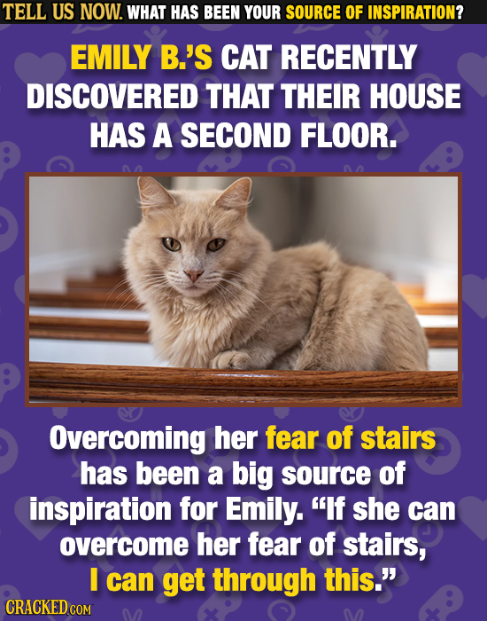 TELL US NOW. WHAT HAS BEEN YOUR SOURCE OF INSPIRATION? EMILY B.'S CAT RECENTLY DISCOVERED THAT THEIR HOUSE HAS A SECOND FLOOR. Overcoming her fear of