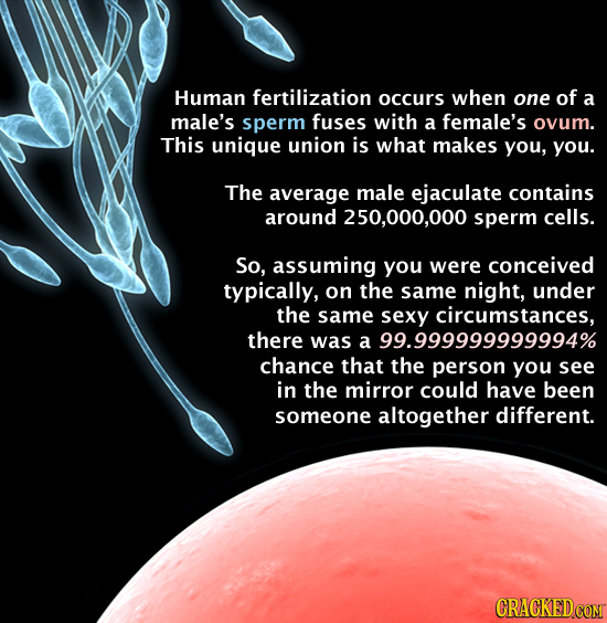 Human fertilization occurs when one of a male's sperm fuses with a female's ovum. This unique union is what makes you, you. The average male ejaculate