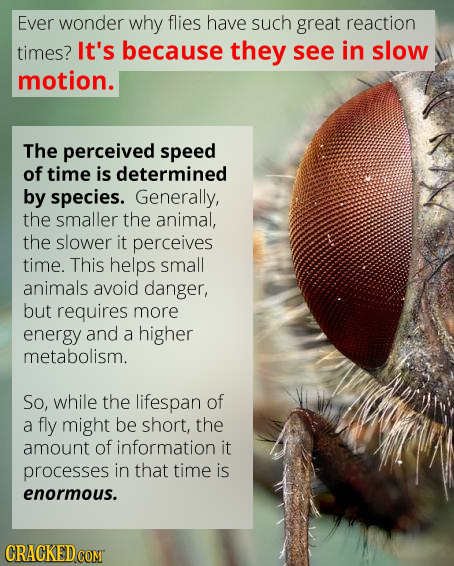 Ever wonder why flies have such great reaction timES? It's because they see in slow motion. The perceived speed of time is determined by species. Gene