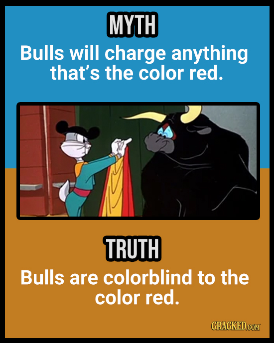 18 Animal Misconceptions We Learned From Movies & TV