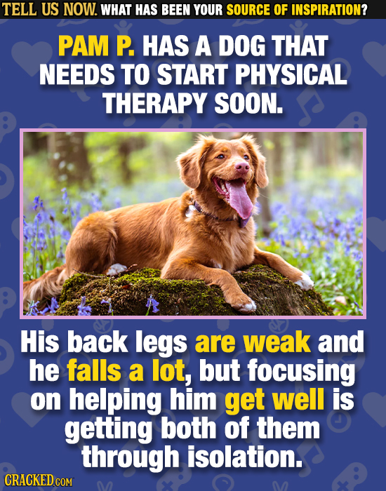 TELL US NOW. WHAT HAS BEEN YOUR SOURCE OF INSPIRATION? PAM P. HAS A DOG THAT NEEDS TO START PHYSICAL THERAPY SOON. His back legs are weak and he falls