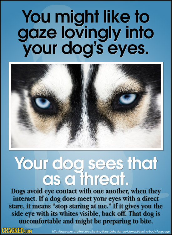 You might like to gaze lovingly into your dog's eyes. Your dog sees that as a threat. Dogs avoid eye contact with one another, when they interact. If