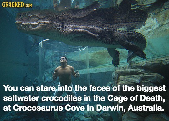 CRACKEDcO COM You can stare. into the faces of the biggest saltwater crocodiles in the Cage of Death, at Crocosaurus Cove in Darwin, Australia.