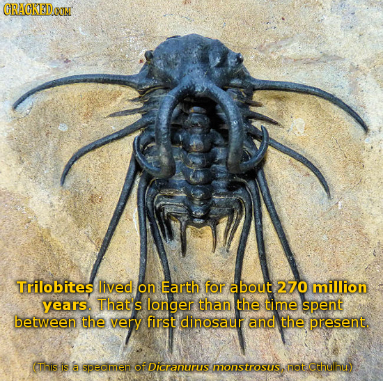CRACKED COM Trilobites lived on Earth for about 270 million years. That's longer than the time spent between the very first dinosaur and the present.