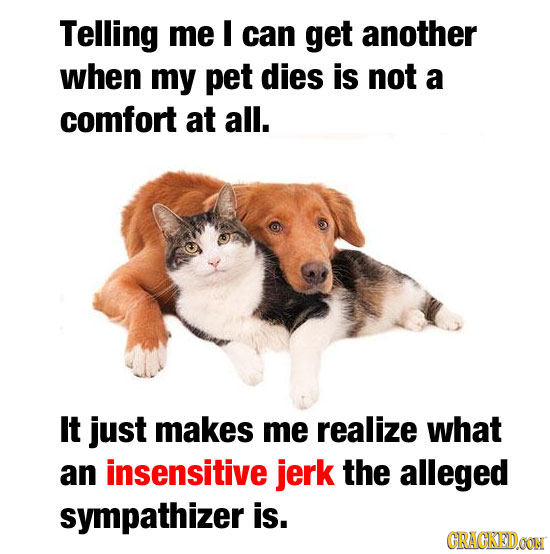 Telling me I can get another when my pet dies is not a comfort at all. It just makes me realize what an insensitive jerk the alleged sympathizer is. C
