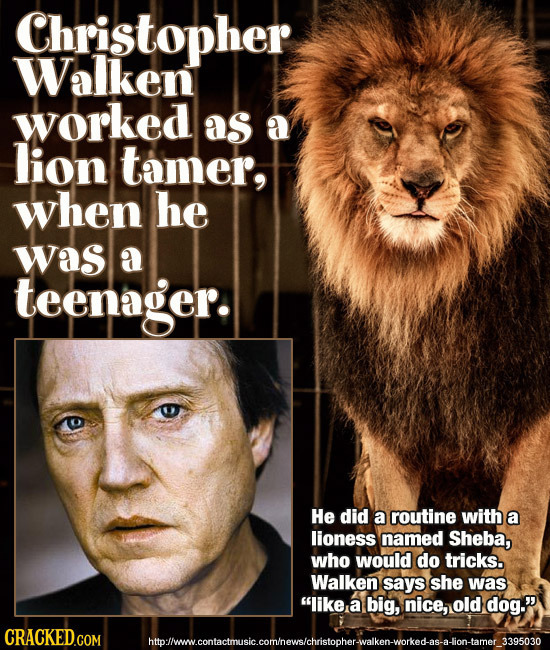 Christopher Walken worked as a lion tamer, when he was a teenager. He did a routine with a lioness named Sheba, who would do tricks. Walken says she w