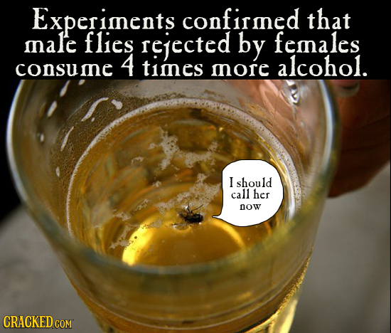 Experiments confirined that male flies rejected by femnales 4 consume timnes alcohol. mnore I should call her Dow CRACKED COM