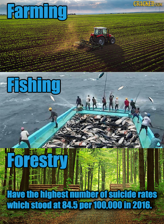 Farming CRACKEDCO Fishing Forestry Have the highest number of suicide rates which stood at 84.5 per 100,000 in 2016.