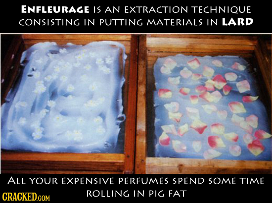 ENFLEURAGE IS AN EXTRACTION TECHNIQUE CONSISTING IN PUTTING MATERIALS IN LARD ALL YOUR EXPENSIVE PERFUMES SPEND SOME TIME CRACKED.COM ROLLING IN PIG F