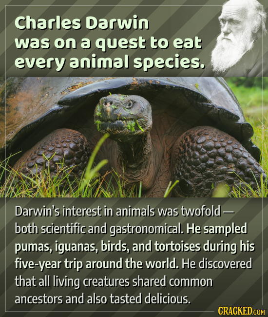 Charles Darwin was on a quest to eat every animal species. Darwin's interest in animals was twofold - both scientific and gastronomical. He sampled pu