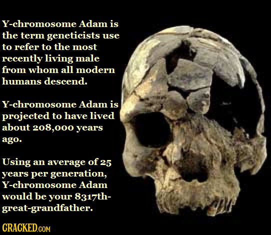 Y-chromosome Adam is the term geneticists use to refer to the most recently living male from whom all modern humans descend. Y-chromosome Adam is proj