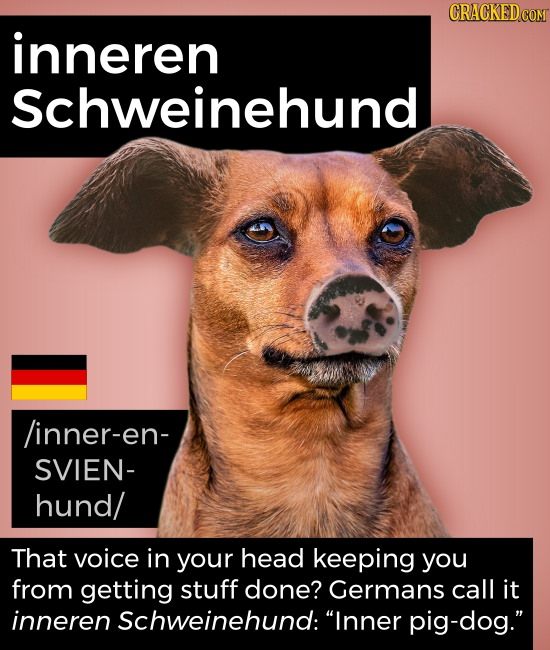 inneren Schweinehund /inner-en- SVIEN- hund/ That voice in your head keeping you from getting stuff done? Germans call it inneren Schweinehund: Inner