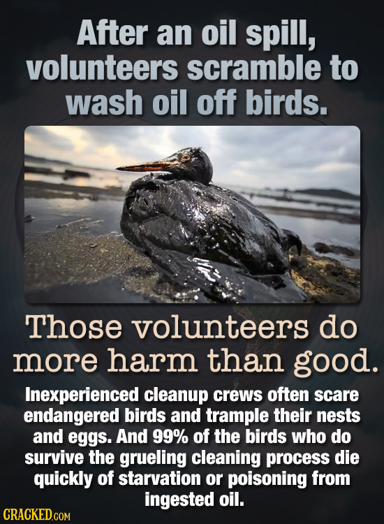 After an oil spill, volunteers scramble to wash oil off birds. Those volunteers do more harm than good. Inexperienced cleanup crews often scare endang