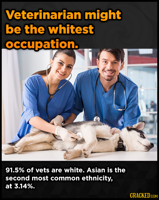 Veterinarian might be the whitest occupation. 91.5% of vets are white. Asian is the second most common ethnicity, at 3.14%.