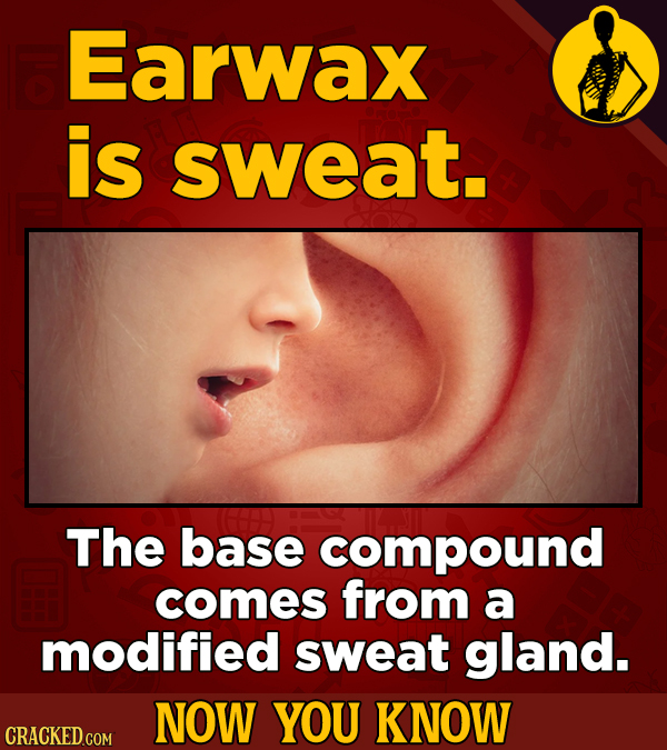Earwax is sweat. The base compound comes from a modified sweat gland. NOW YOU KNOW CRACKED COM