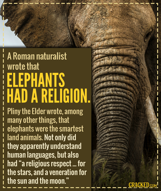 A Roman naturalist wrote that ELEPHANTS HAD A RELIGION. Pliny the Elder wrote, among many other things, that elephants were the smartest land animals.