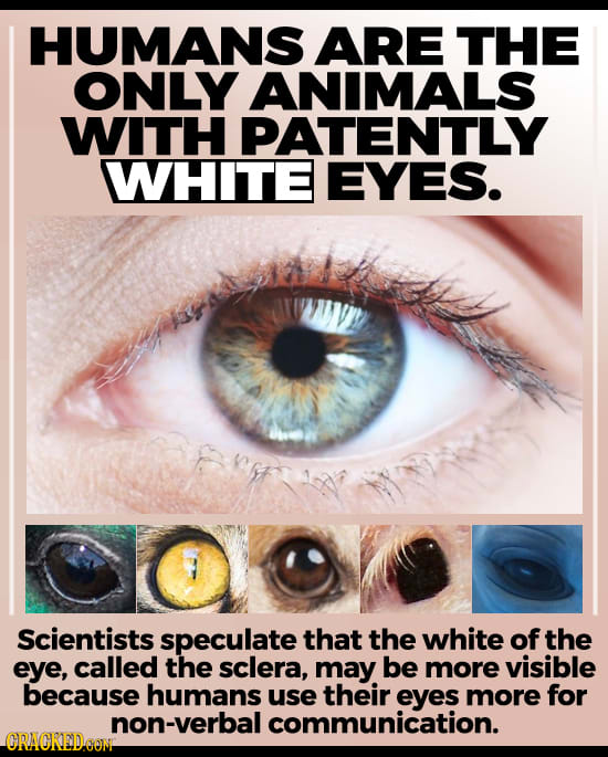 15 Scientific Reasons Humans Are The Weirdest Animals Alive