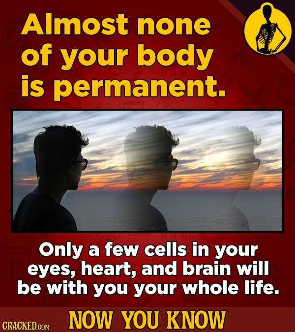 Almost none of your body is permanent. Only a few cells in your eyes, heart, and brain will be with you your whole life. NOW YOU KNOW CRACKED COM