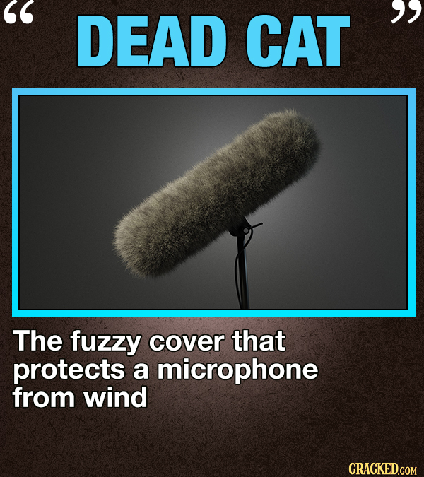 DEAD CAT  The fuzzy cover that protects a microphone from wind CRACKED.COM