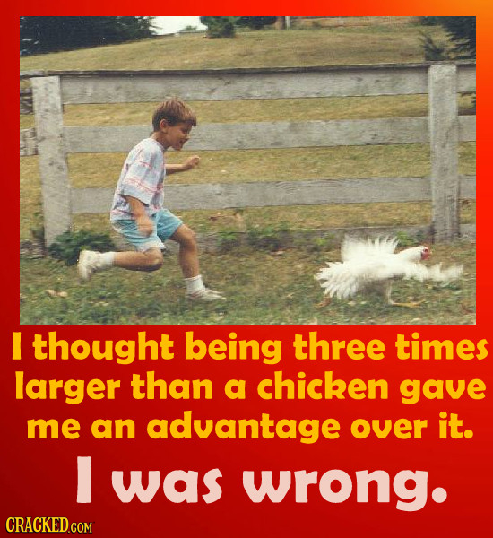 thought being three times larger than a chicken gave me an advantage over it. was wrong. CRACKED.COM