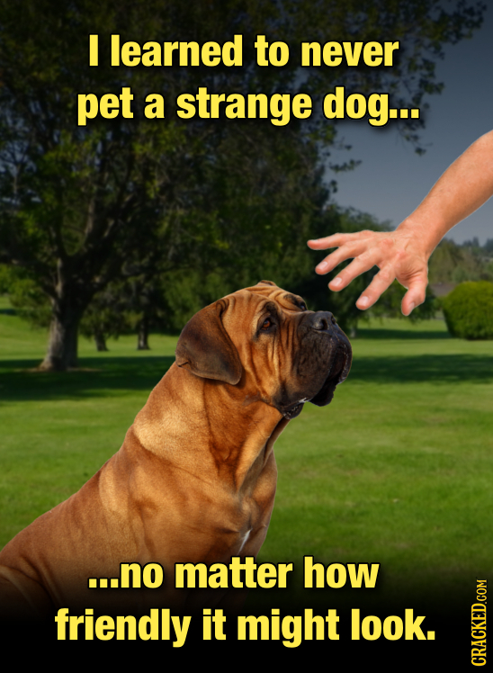 I learned to never pet a strange dog... ...no matter how friendly it might look. CRAG