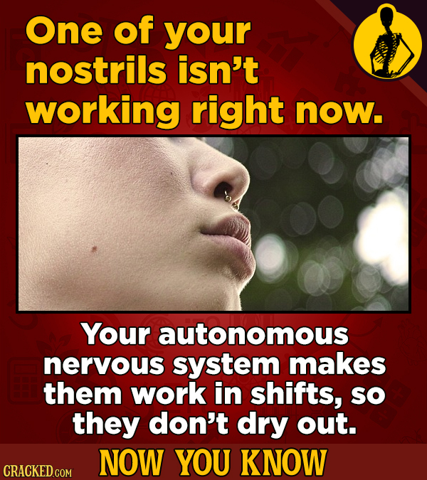 One of your nostrils isn't working right now. Your autonomous nervous system makes them work in shifts, sO they don't dry out. NOW YOU KNOW CRACKED CO