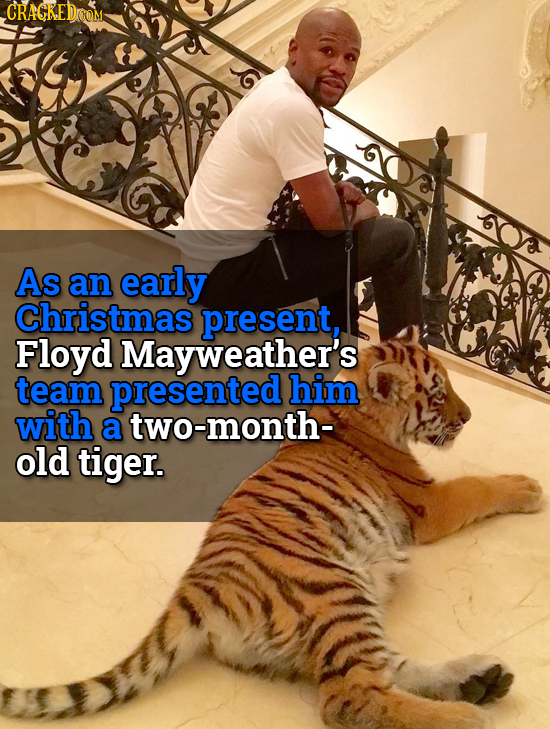 CRACKEDOOM As an early Christmas present, Floyd Mayweather's team presented him with a two-month- old tiger.