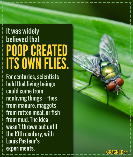 It was widely believed that POOP CREATED ITS OWN FLIES. For centuries, scientists held that living beings could come from nonliving things- -flies fro