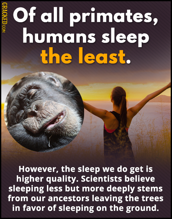 CRACKED COM Of all primates, humans sleep the least. However, the sleep we do get is higher quality. Scientists believe sleeping less but more deeply