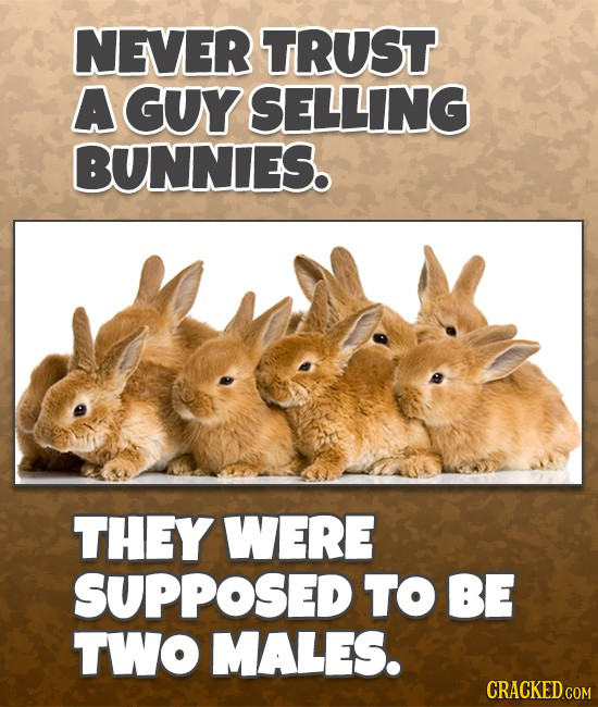NEVER TRUST A GUY SELLING BUNNIES. THEY WERE SUPPOSED TO BE TWO MALES.