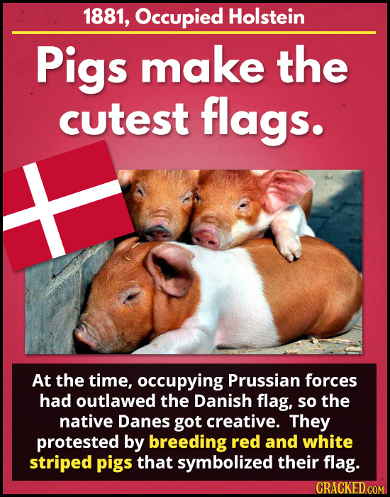 1881, Occupied Holstein Pigs make the cutest flags. At the time, occupying Prussian forces had outlawed the Danish flag, so the native Danes got creat
